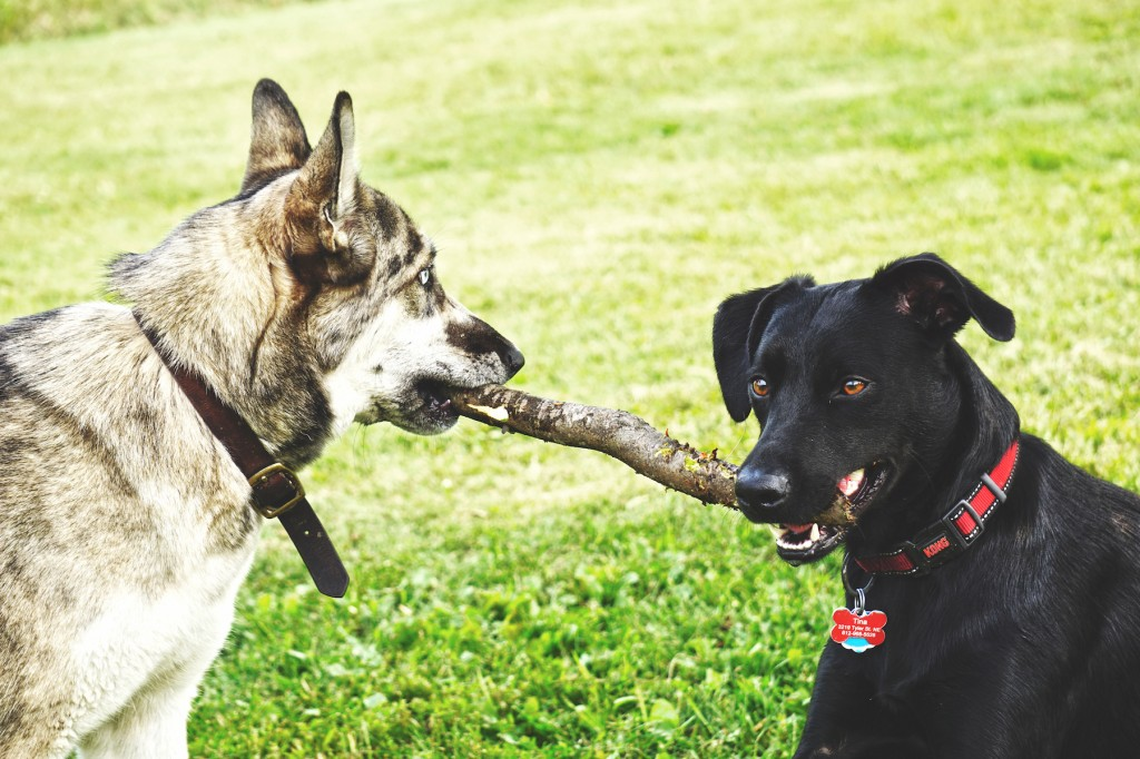 Dog Parks In Brooklyn Park Mn